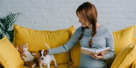 What Happens to Your Pets During a Divorce?, Farmington, Connecticut