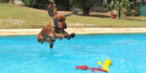 3 Reasons to Install a Swimming Pool Ramp for Your Dog, Kihei, Hawaii