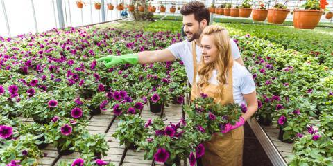 How to Get Your Garden Ready for Autumn, Erlanger, Kentucky