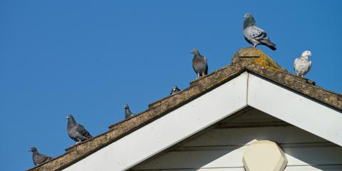 4 Ways to Keep Birds Away From Your Roof, Wisconsin Rapids, Wisconsin