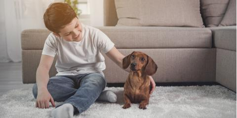 How to Stop Your Dog From Leaving Urine Stains on the Carpet, La Crosse, Wisconsin
