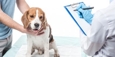 Delhi Veterinary Clinic, Inc., Veterinarians, Health and Beauty, Delhi Township, Ohio
