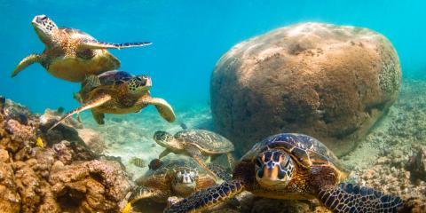 Hawaii's 5 Most Famous Sea Creatures, Waianae, Hawaii