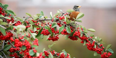 5 Wild Birds You Might Spot in Connecticut, Old Saybrook Center, Connecticut