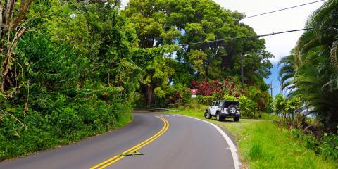 6 Wildlife Wonders to Look for Along Maui's Beaches, Kahului, Hawaii