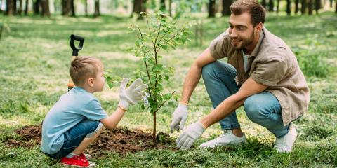 Why Is Fertilization Necessary in Tree Care?, Cincinnati, Ohio