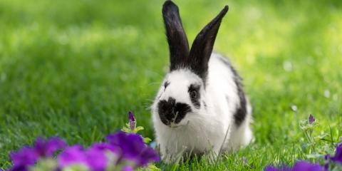 What Are Some Flowers You Can Plant That Rabbits Won't Eat?, Anchorage, Alaska