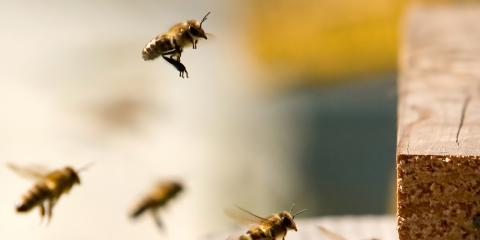 3 Flying Insects to Call Your Pest Control Expert About, Fayetteville, Tennessee