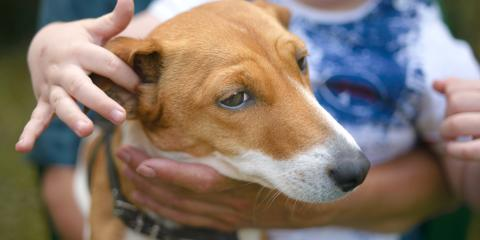 How to Treat Hematomas in Dogs, Clarksville, Arkansas