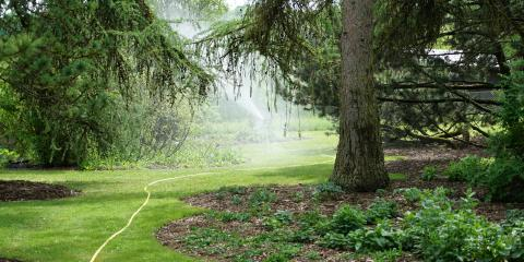 A Guide to the Dangers of Overwatering & Underwatering Trees, New London, North Carolina