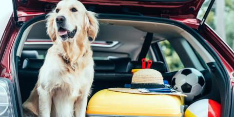 5 Tips to Prepare Your Pet for a Road Trip, Richmond Hill, Georgia