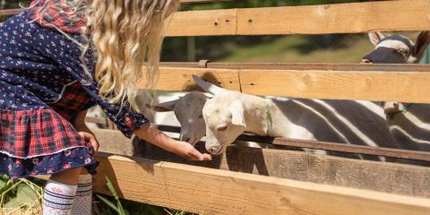 4 Tips for Helping Your Child Raise Livestock for 4-H, Bethel, Ohio