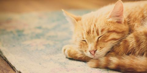 3 Vaccines Your Cat Needs Before Pet Boarding, Newport-Fort Thomas, Kentucky