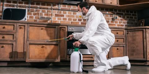 What Types of Services Do Pest Control Companies Provide?, West Plains, Missouri