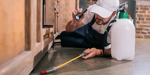 3 Common Signs You Need Pest Control Services, Mount Washington, Kentucky