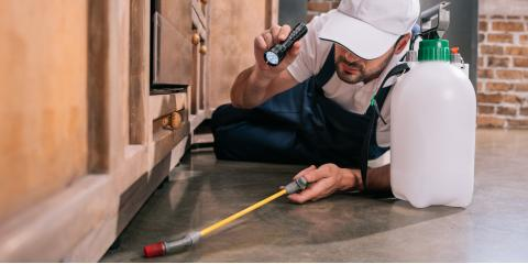 4 Signs You Need Pest Control Services, Staunton, Illinois