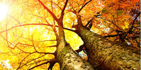 4 Professional Tips for Excellent Fall Tree Care, Ozark, Alabama