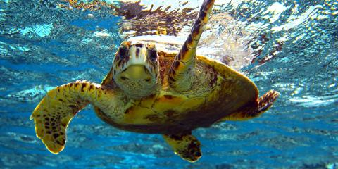 4 Frequently Asked Questions About Marine Life in Hawaii, Waianae, Hawaii