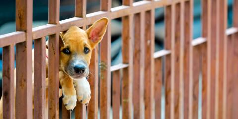 4 Fence Installation Tips to Keep Your Pets Safe , Hamptonburgh, New York