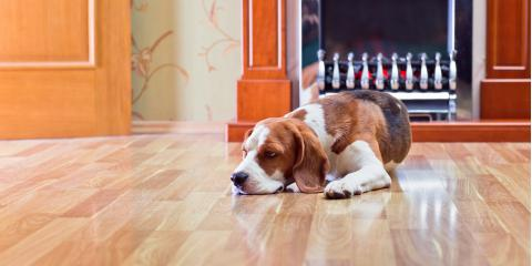 3 Care Tips for Pet Owners With Hardwood Flooring, Forest Lake, Minnesota
