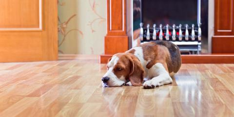 3 Helpful Tips for Maintaining Hardwood Flooring With Pets, Springfield, Massachusetts