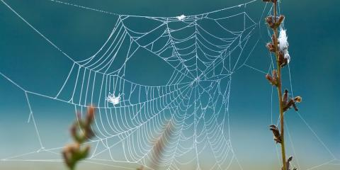 3 Myths About Spiders Debunked by Local Pest Control Experts, Lihue, Hawaii