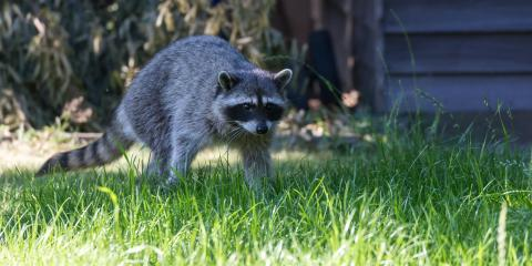 3 Types of Animals That Can Damage Your Roof, Thornton, Colorado