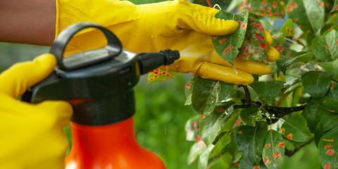 3 Common Tree Diseases In Wisconsin, Crescent, Wisconsin