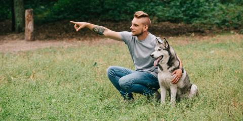 4 Tips to Keep Northern Breed Dogs Cool this Summer, Newport-Fort Thomas, Kentucky