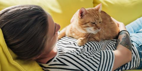 4 Signs Your Pet Might Need Emergency Veterinarian Care, Avon, New York