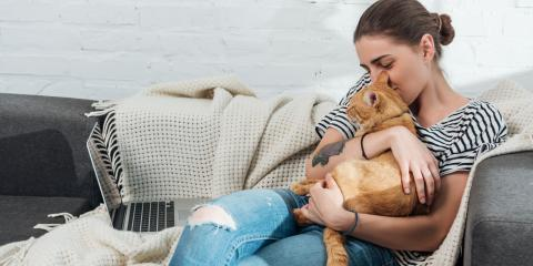 Can Pets Experience Allergies?, Amsterdam, Virginia