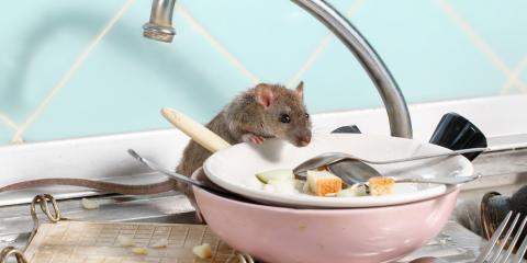 5 Tips for Keeping Rodents Out of Your Home, San Diego, California