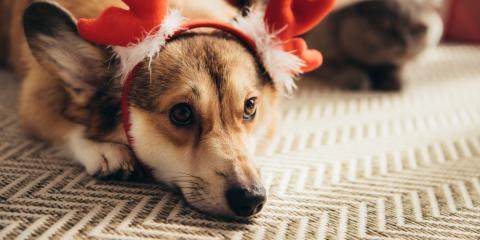 4 Holiday Safety Tips for Your Pet   , Sycamore, Ohio