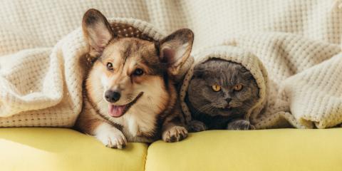 How to Help Your Dog & Cat Coexist, Warren, Ohio