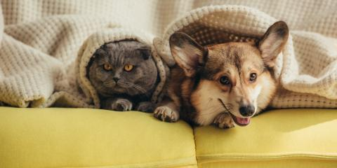 3 Surprising Ways That Pets Affect Your Heating & Cooling System, West Allis, Wisconsin
