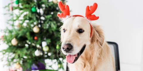 4 Holiday Foods to Avoid Feeding Your Dog, San Marcos, Texas