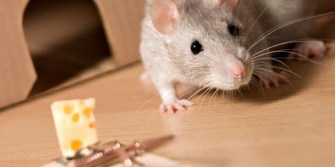 3 Reasons to Call a Professional for Rat Control Services, Dothan, Alabama