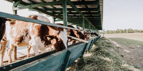 4 Safety Tips to Embrace on Your Farm, Meadville, Pennsylvania