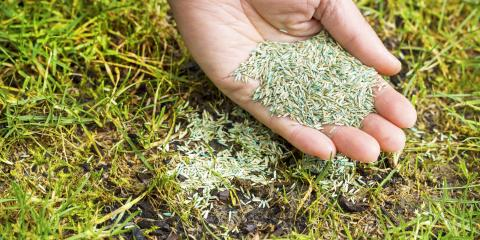 5 Tips to Prepare Your Lawn for Spring, Eldersburg, Maryland