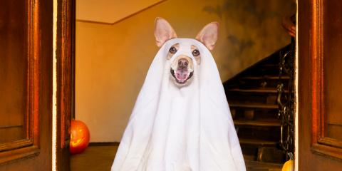 4 Tips to Dressing Your Pet for Halloween, Hilo, Hawaii