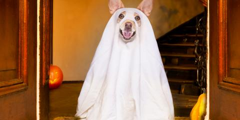 How Halloween Can Be Dangerous for Dogs, High Point, North Carolina