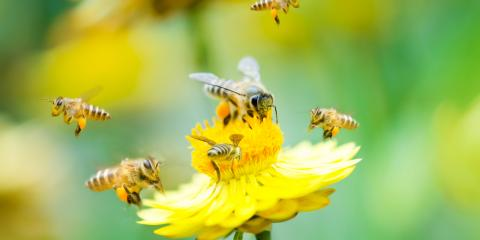 The Do's & Don'ts for Dealing With a Beehive , Concord, North Carolina