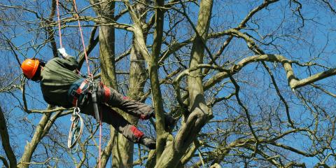3 Reasons to Hire an Arborist When In Need of Professional Tree Care, Ewa, Hawaii