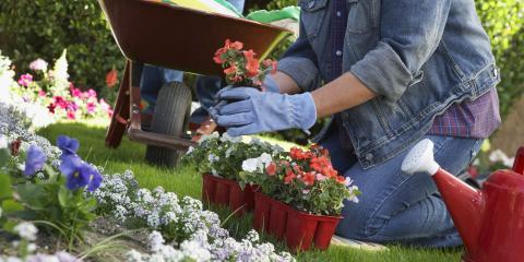 A Beginner's Guide to Gardening, Arden Hills, Minnesota