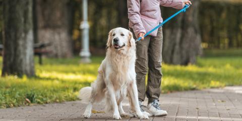 Asphalt Paving Professionals Offer 4 Safety Tips for Walking Dogs , Rhinelander, Wisconsin