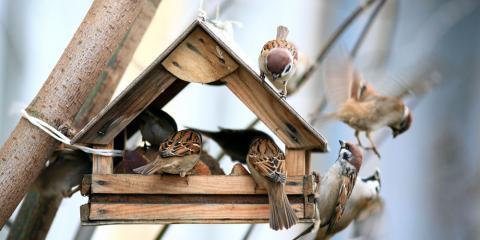3 Common Wild Bird Feed Mistakes, Bethel, Ohio