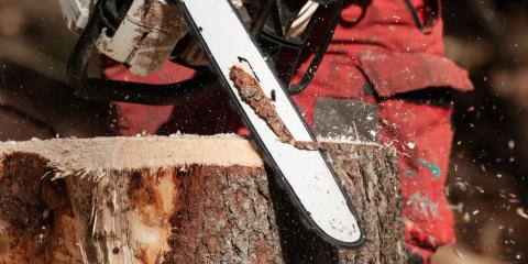 How Tree Stumps Attract Termites, Ewa, Hawaii
