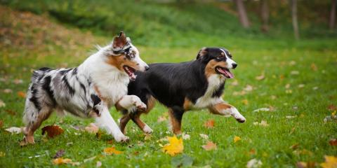 5 Tips for Preparing Your Pet for a Stay at a Kennel, Churchville, New York