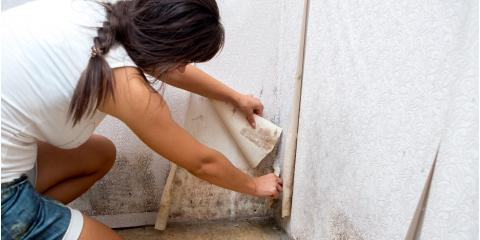 4 Signs Your Home Requires Mold Remediation, Brooklyn, New York