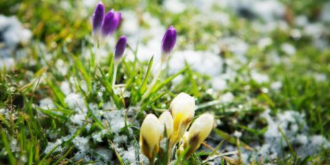 How to Prepare Perennial Flowers for the Winter, Hamilton, Ohio